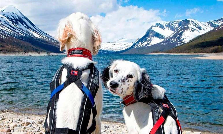 PIM management of pet catalogs Non-stop dogwear